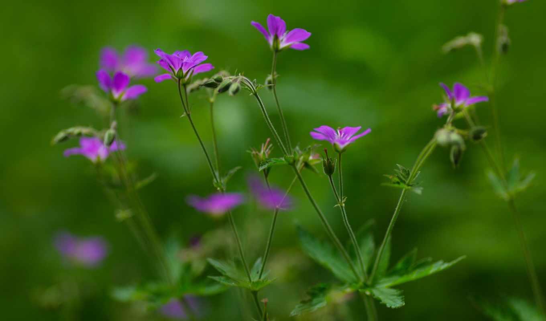 цветы, картинка, нежность, нов, лепестки,