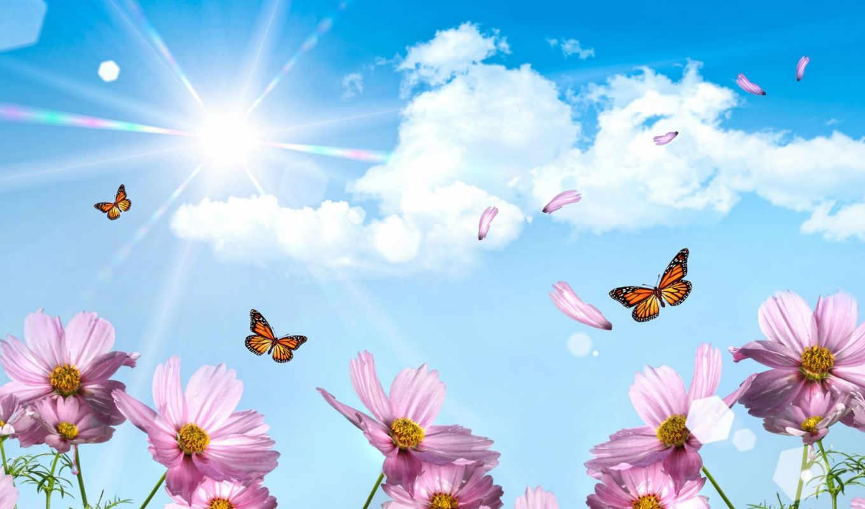 цветы, небо, бабочки, голубое, весна, янв,