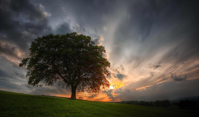 дерево, закат, небо, поле, качестве,