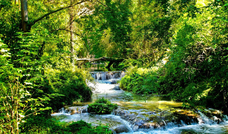 bush, контрастность, лес, flusswald, деревья, скалы, зелёный, уровень, summer, ручей,