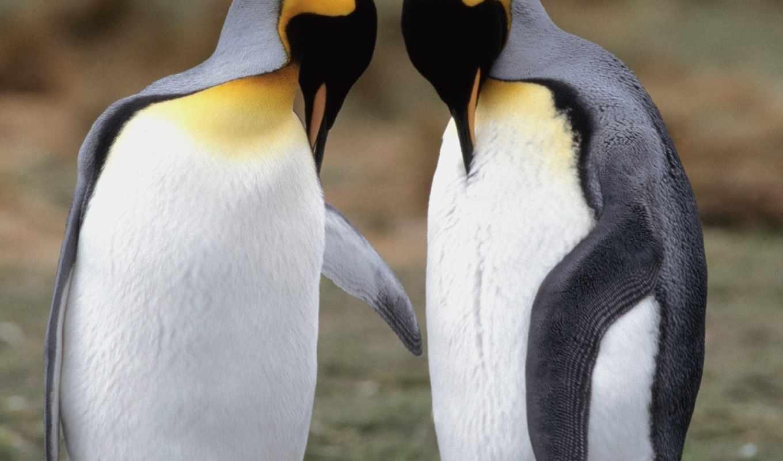 пингвины, vapor, влюбленные, птицы,
