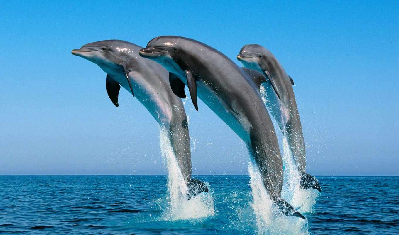 ocean, их, world, house, июл, они, человека, john, лилли,
