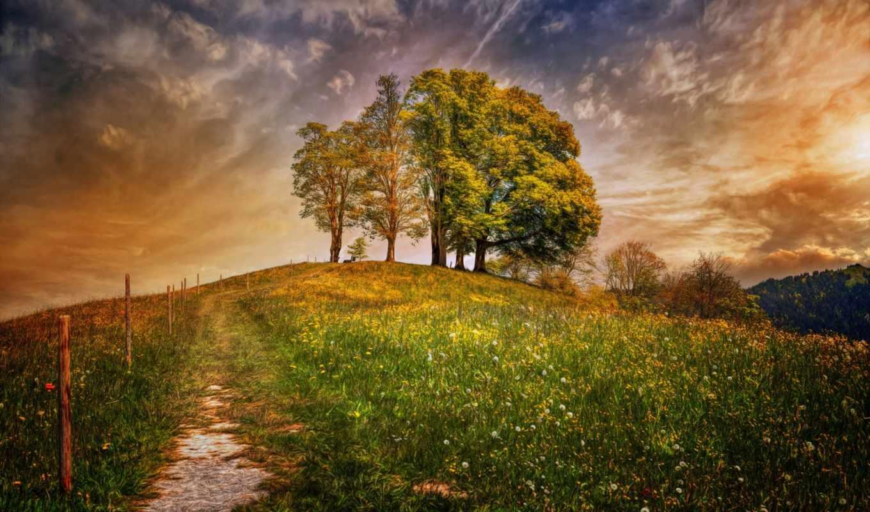 поле, oblaka, trees, швейцария, обработка, природа,