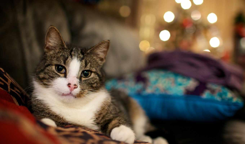 огоньки, new, год, кошки, кот, фев, нравится, широкоформатные, коллекция,