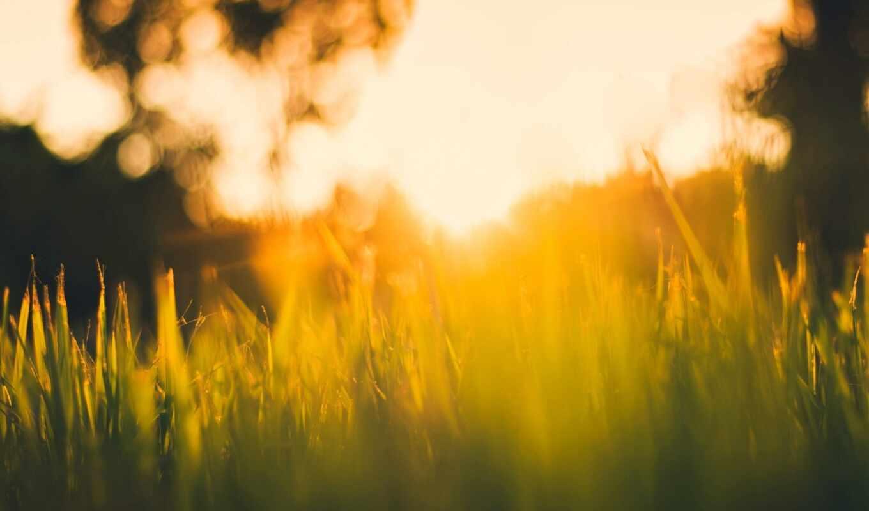 трава, зелёный, свет, солнечный