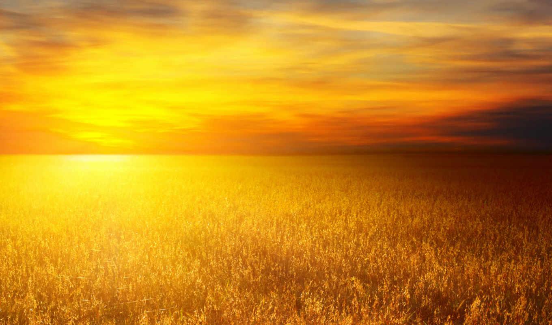 поле, пейзажи, поля, пшеница, пшеничные, природа, пшеничное, солнце,