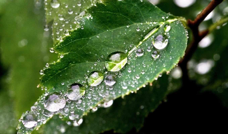 full, роса, капли, природа, бесплатные, oboi, зелёный, макро,
