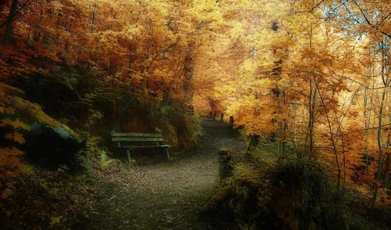 природа, осень, природы, высокого, есть,