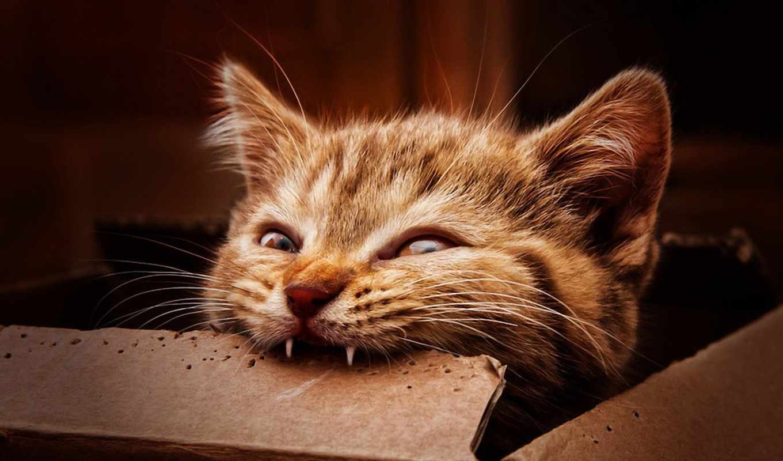 everything, кошки, они, будет, самые, их,