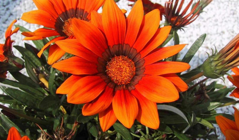 цветы, настроение, красивые, украсят, поднимут, спасибо, обоях, turbobit, красивых, флорист, dfiles, изображение, компьютера, www, твоего, картинку, великолепные, volody, необычайно, artfotki, за, код