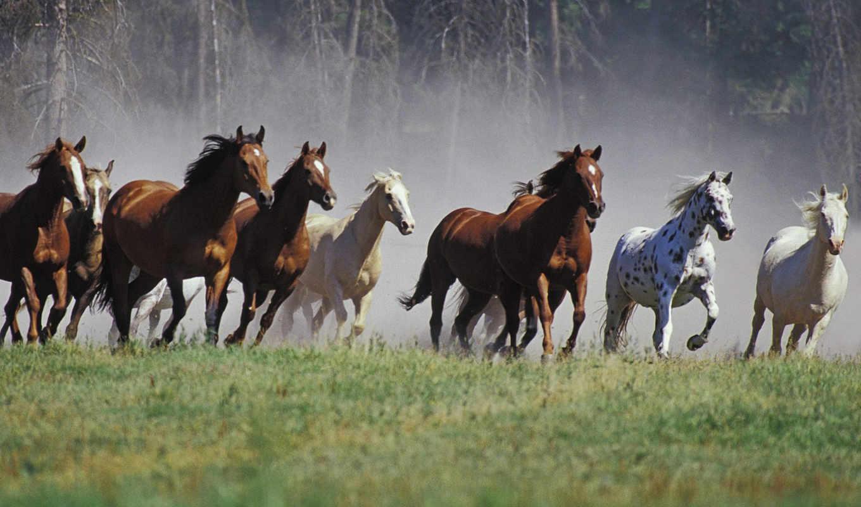 картинка, животные, horses, fondo, звери, caballos, horse, running, pantalla, manada, poster, free, with,