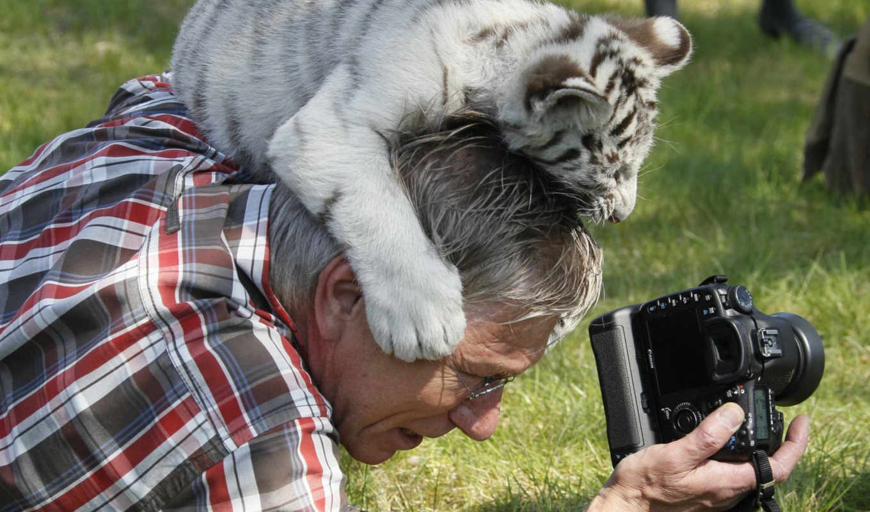 тигренок, от, германия, сафари, парке, играет, фотографом, ест, веселые, весны, фотографа, помывка, многое, слонов, собаки, приходу, французские, зверушки, другое, зажиточные, радуются, тайваня, псы,