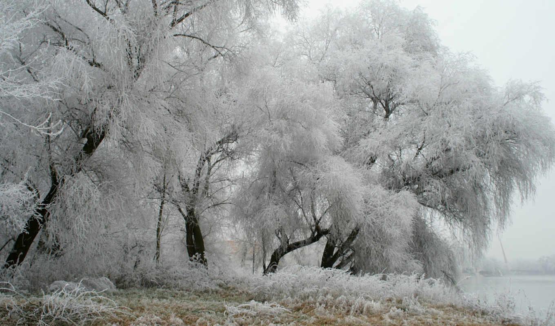зима, германия, иней, парк, деревья, картинка, природа,