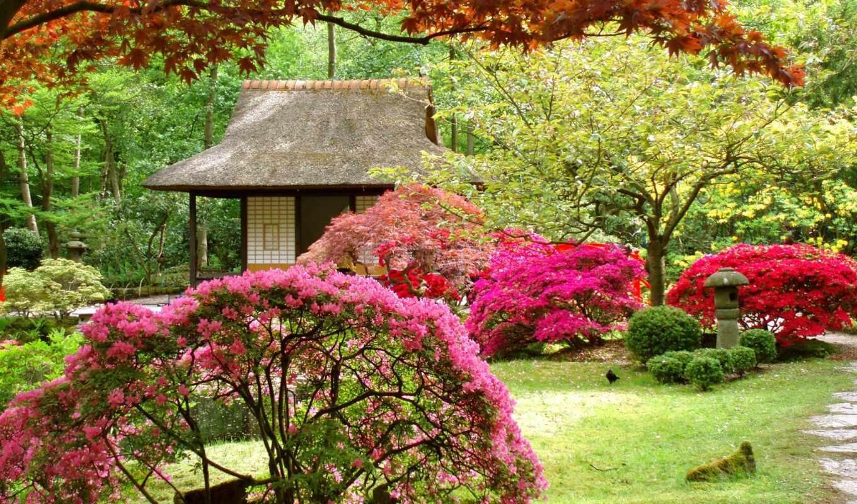 кустарники, цветущие, деревья, кустарников, цветы, цветущих,