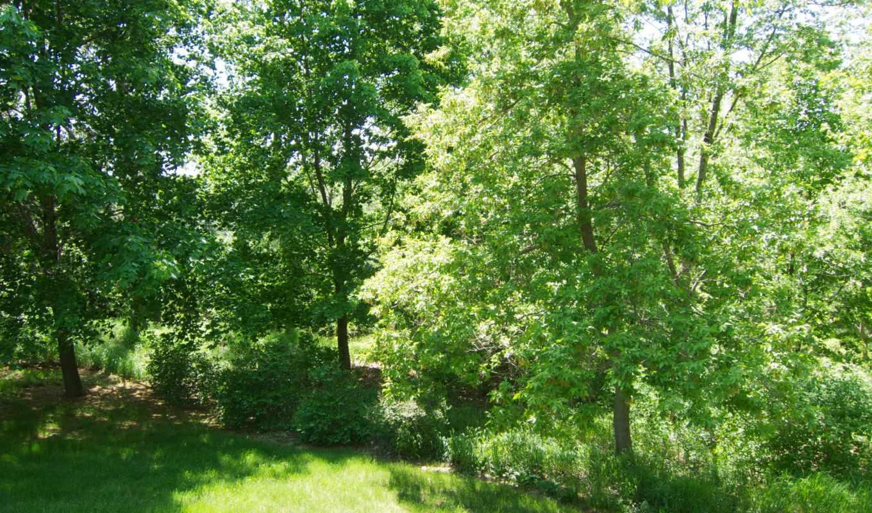 природа, картинка, seasons, года, summer, trees,