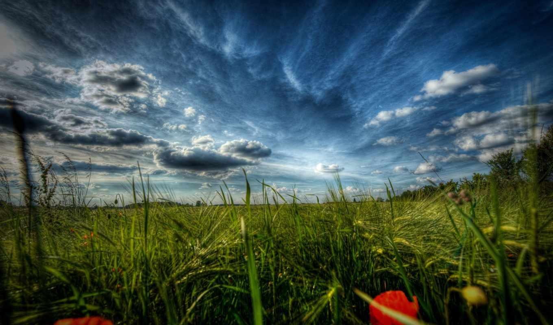 природа, поле, маки, margin, цветы, пейзажи -, макро, трава,