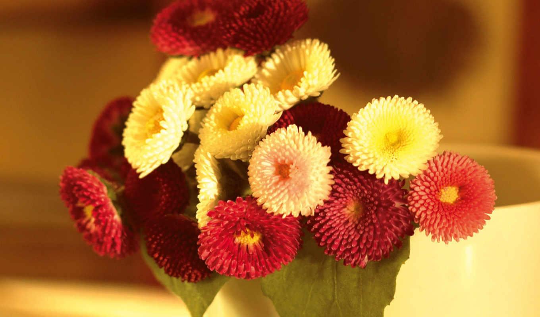 маргаритки, bouquet, цветы, настроение,