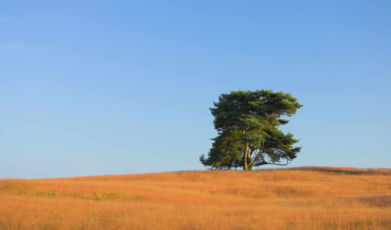 tree, iphone, природа, сборник,