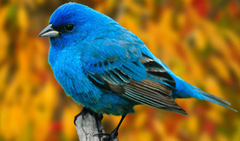 birds, twitter,
