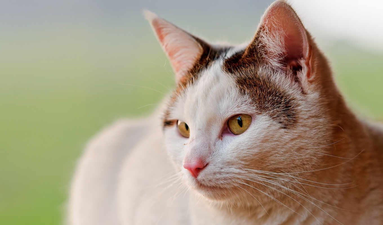 кот, cherry, eyes, spotted, cats, mobile, ноутбук, mac,