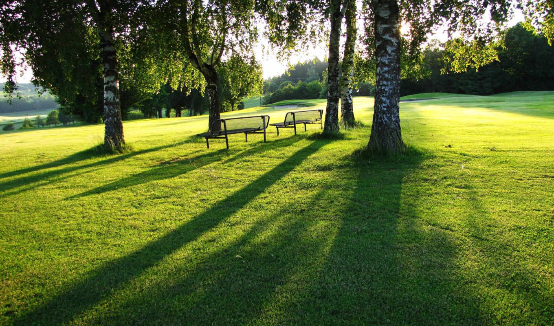 под, берёзами, газон, зелень, лето, скамейки, трава, park,
