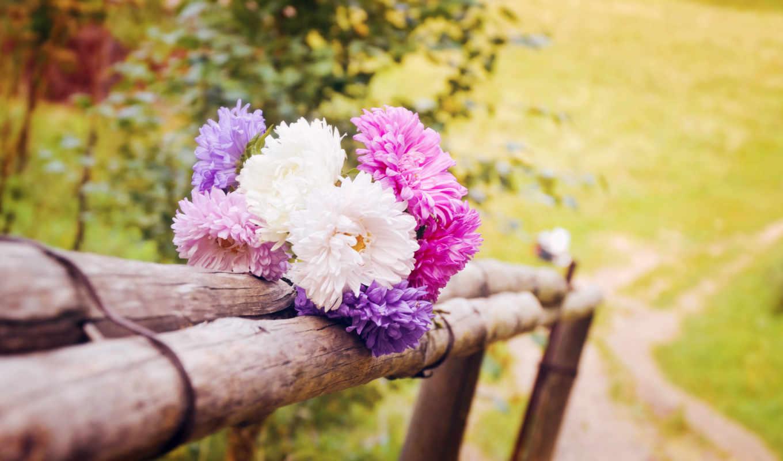 сумки, цветы, макро, summer, дачный, красиво, cute,
