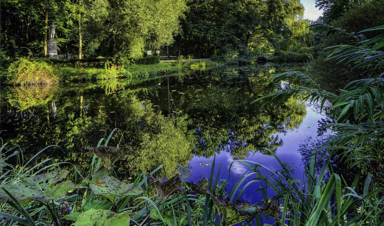 landscape, пруд, растения, park, природа, деревя, hdr, imagini,