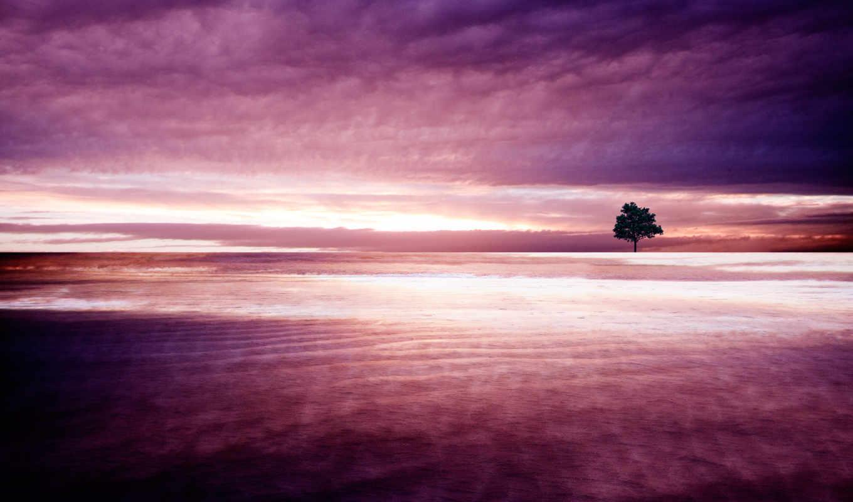 природа, purple, facebook, covers, images, desktop, cover,