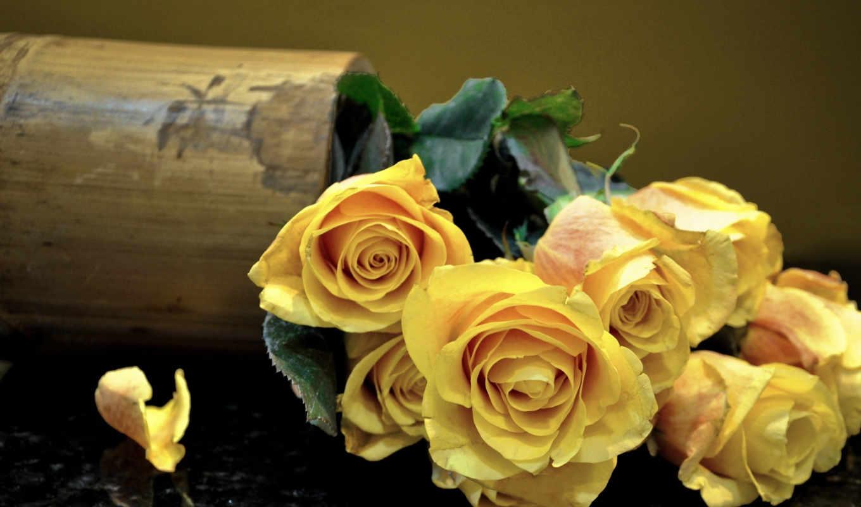 желтые, розы, цветы, букет,