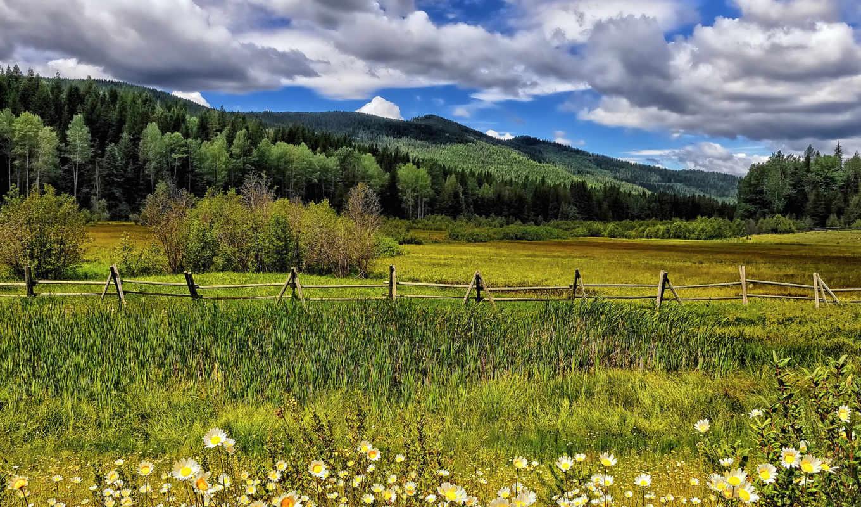 цветы, луг, ромашки, забор, деревья, облака, горы,