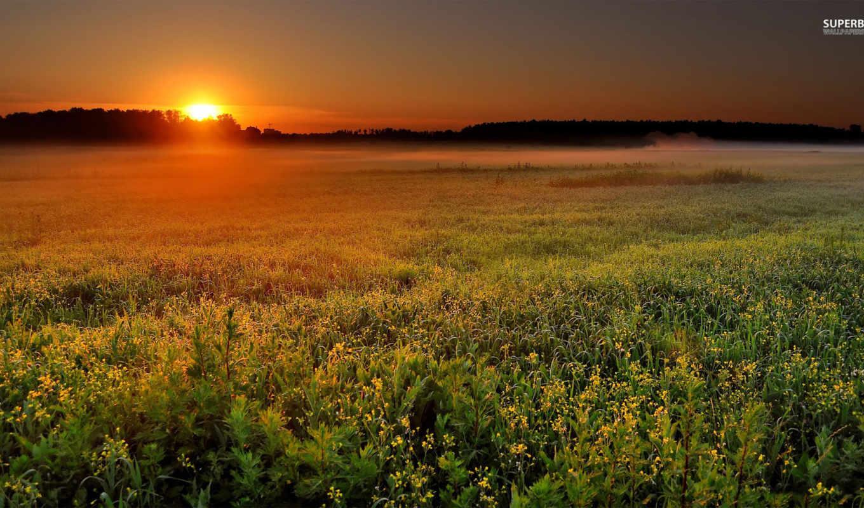 поле, природа, landscape, рассвет, sun, восход, туман, утро,