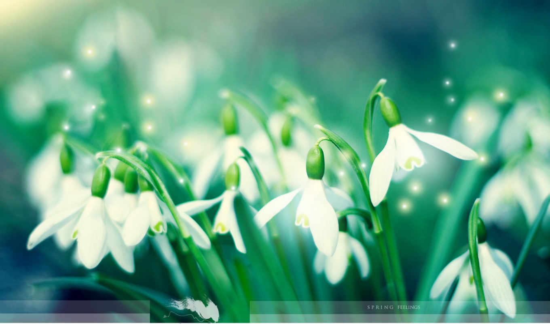 подснежники, весна, цветы, зелёный, pictures,