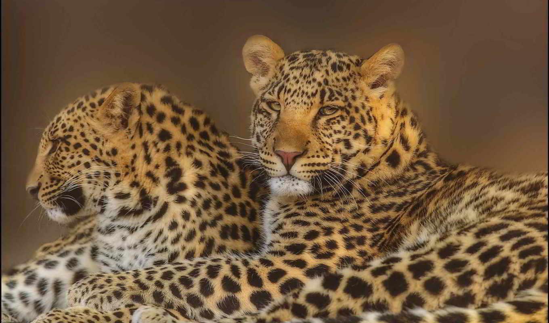 Картинка с леопардом который можно, годик