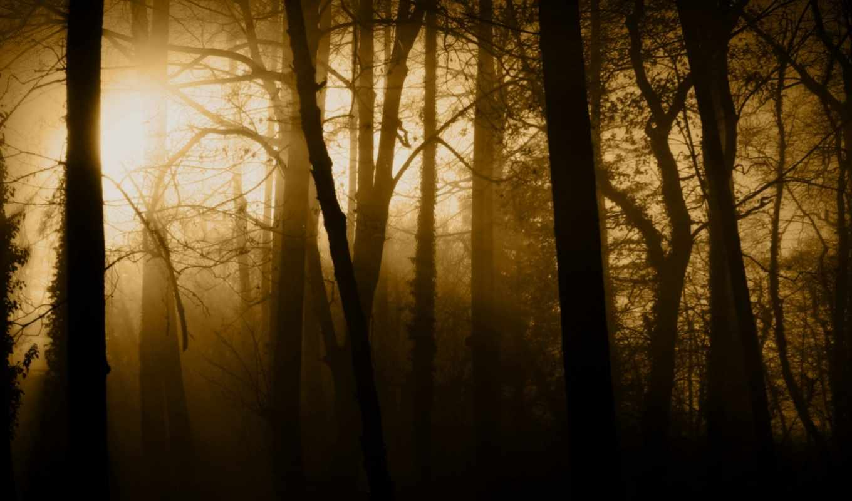 лес, свет, trees, туман, dark, rays, хмурый,