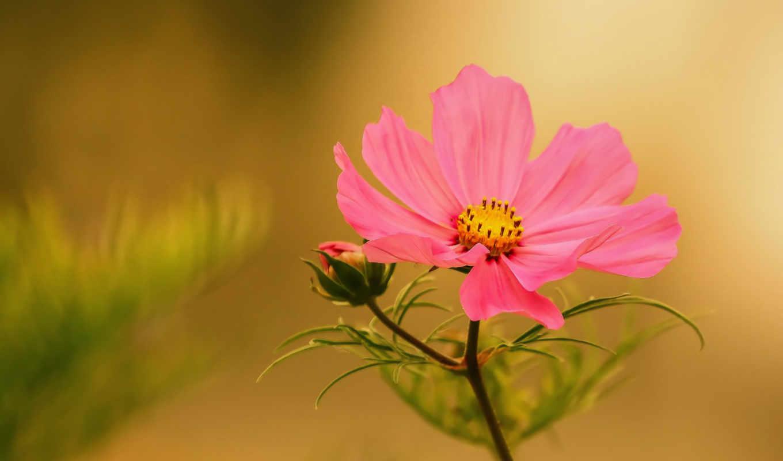 цветы, lifestyle, mixture, часть, images, patrice, томас, фото, макро,