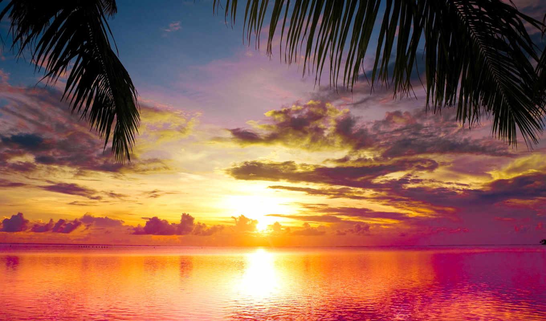 закат, море, пляж, landscape, water, небо, природа, пальмы, palms,