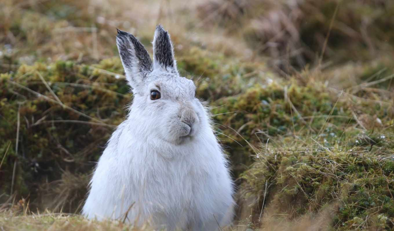 tapety, movie, królik, pulpit, кролик, теме,