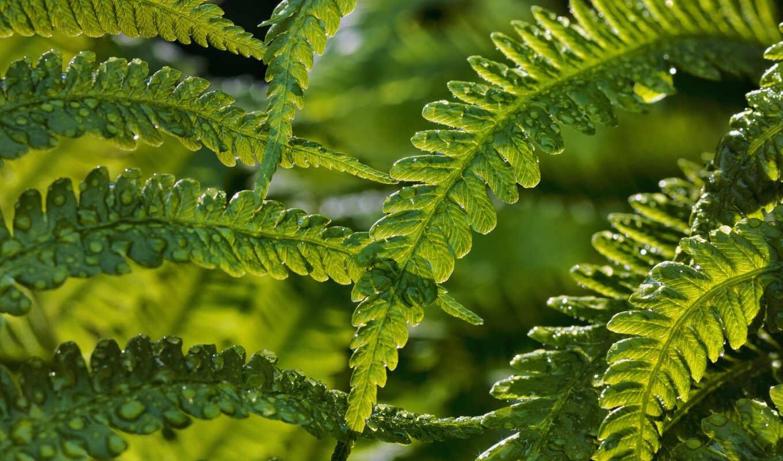 папоротник, растение, id, лист, природа, terrestrial, фон, цветы, день, ipad