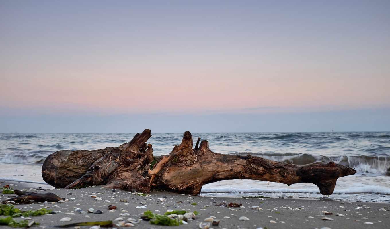 driftwood, flickr, hive, mind, world, побережье, photos, пляж, baumstamm, fluss, treibholz,