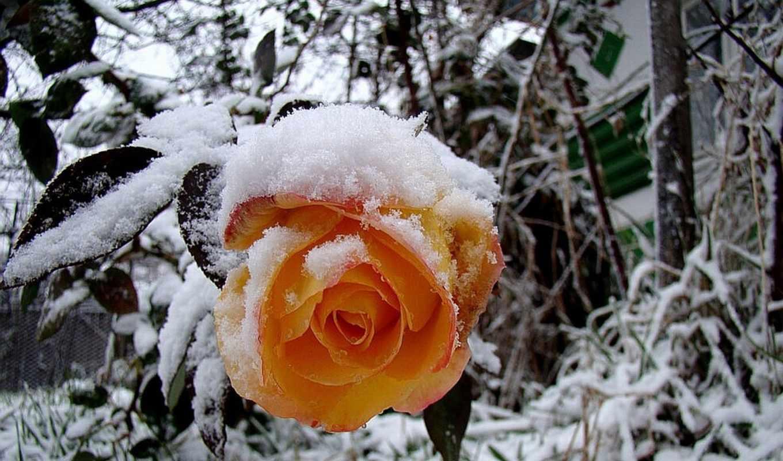 красивые картинки цветов и снега внутреннего оформления