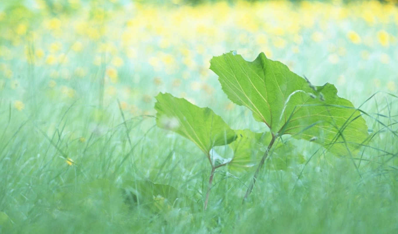 ,лето,листики, трава, макро, green, share, either, зеленые, life,, лист, листочки,