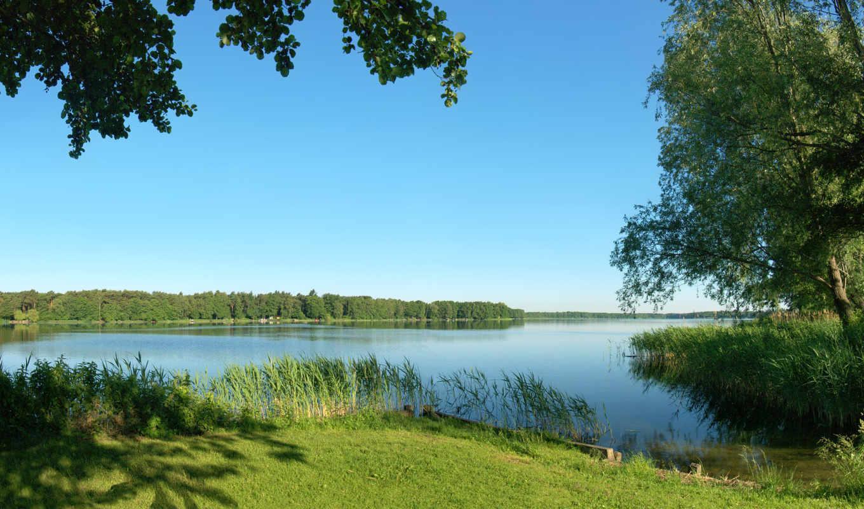 река, summer, природа, деревя, трава, камыши,