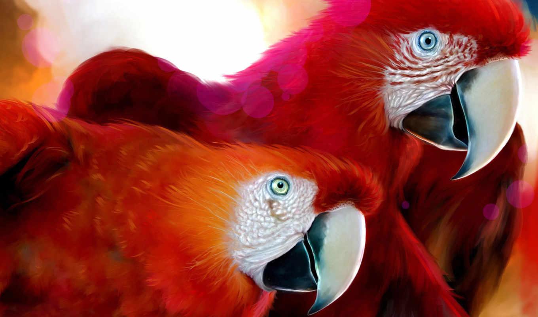 попугаи, красные, попугаев, попугай, фоны, ara, red, животных, птиц,