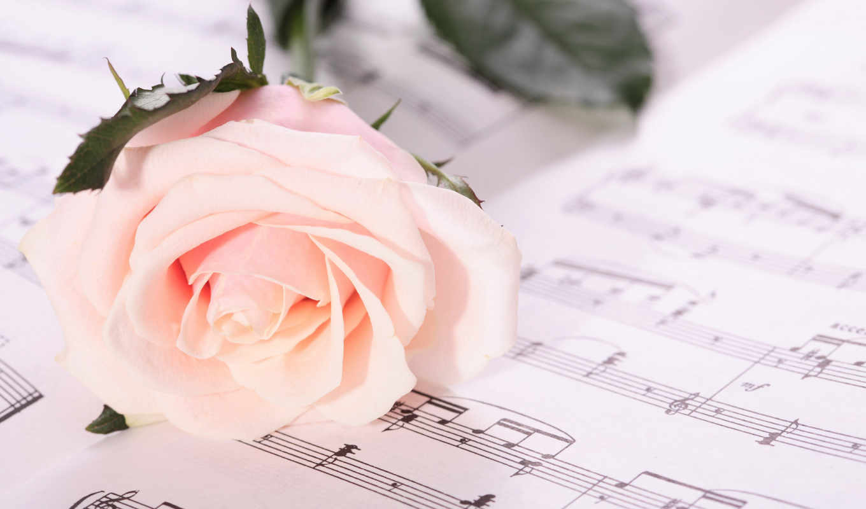 Цветы и ноты картинки красивые