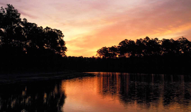 park, national, everglades, florida, nature, pine,