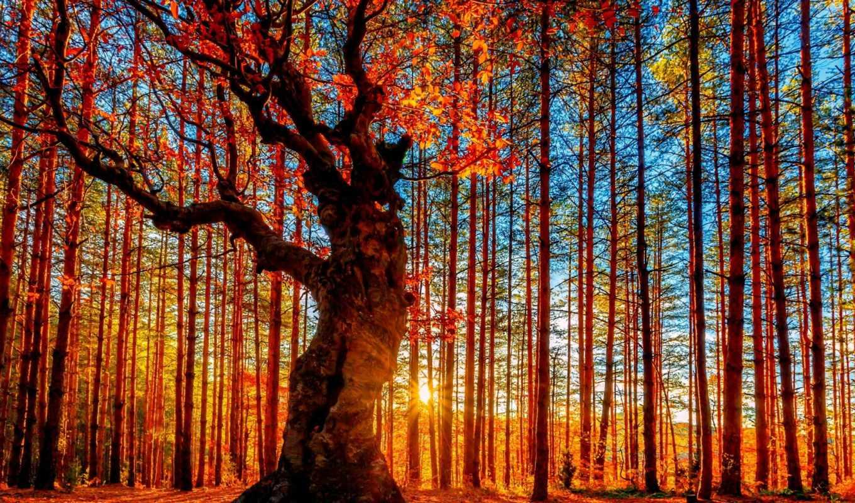 природы, осень, фотографий,