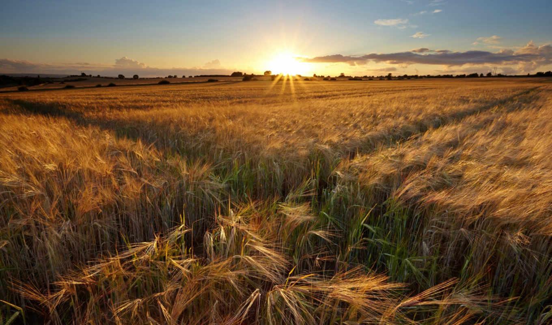 поле, landscape, you, об, more, можно, информация,