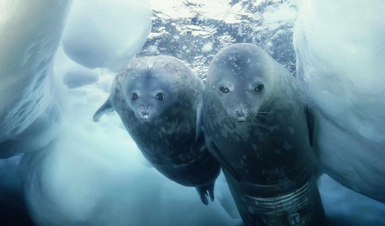 ни, себе, антарктиде, фиг, по, они, фактов, которые, снега, влаги,