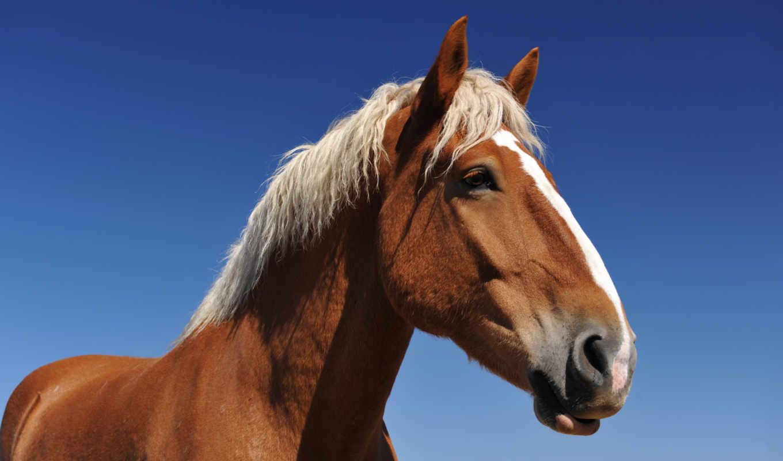 лет, лошади, лошадей, года, год, яndex, лошадь, age, лошадях, card,