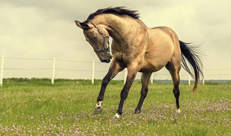 лошадь, природа, поле, красивый, animal, tail, грива
